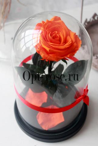 Роза в колбе Premium Оптом(Выс*Диам*Бутон 27*15*7-8см)Цвет оранжевая