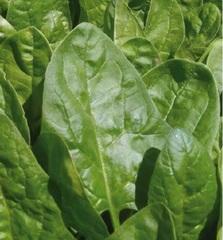 Клиппер F1 семена шпината (Sakata / Саката)