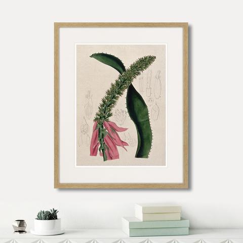 Генри Чарльз Эндрюс - Exotic plants of the world №2, 1815г.