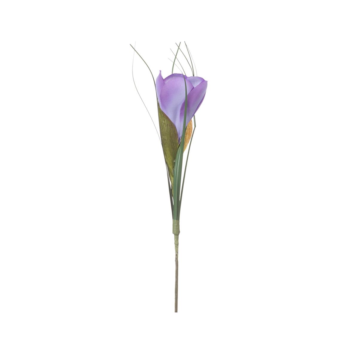 Крокус фиолетовый