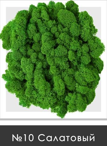Стабилизированный мох (ягель) цвет №10 Салатовый