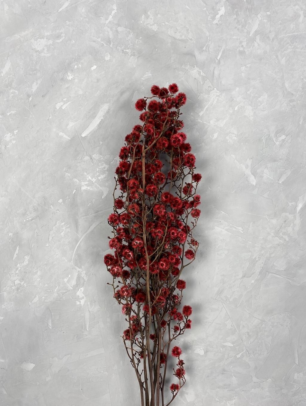 Стилингия красная