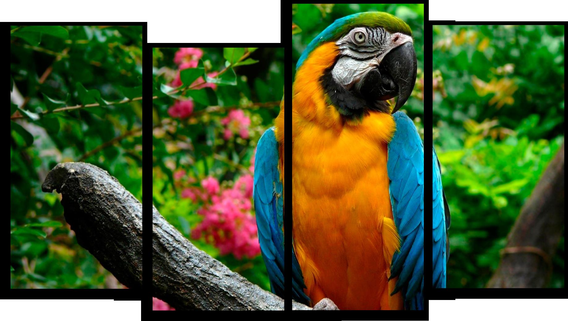 """Животные Модульная картина """"Попугай на ветке"""" М555.png"""