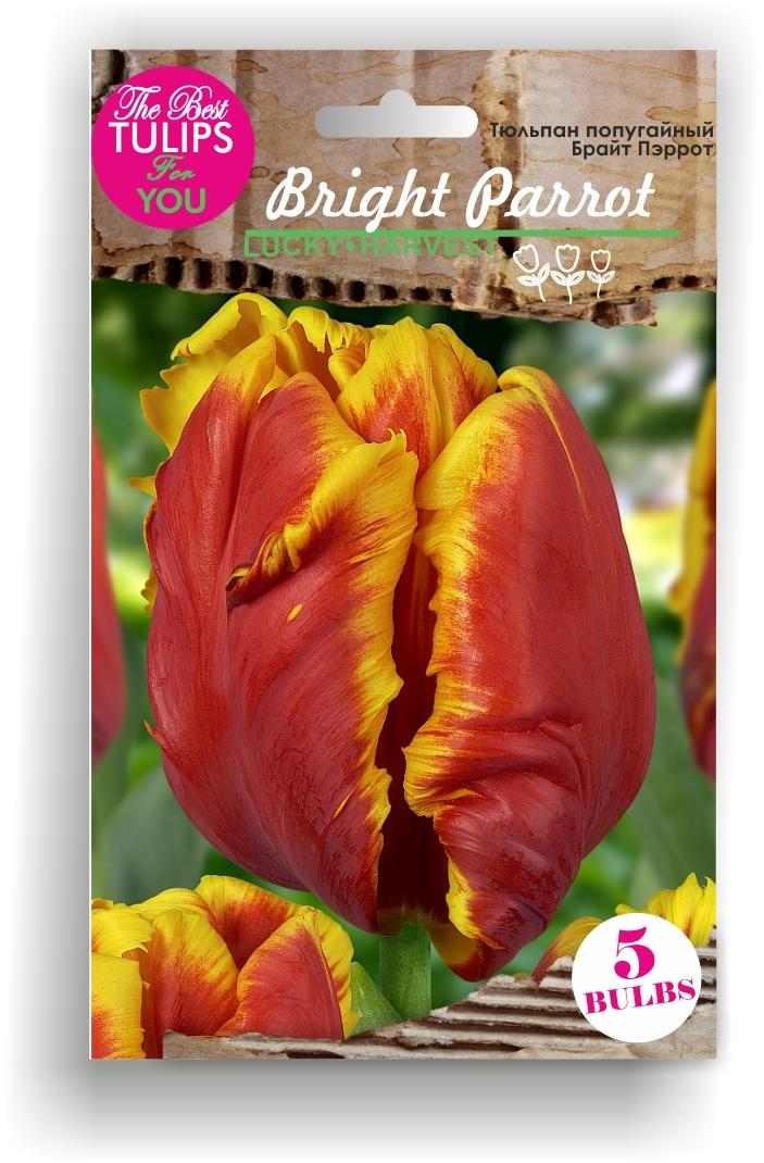 Тюльпан Попугайный  Bright Parrot (Брайт Пэррот) Украина 5 шт