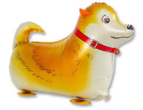 К ХОД Собака рыжая