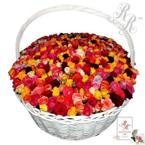 501 роза