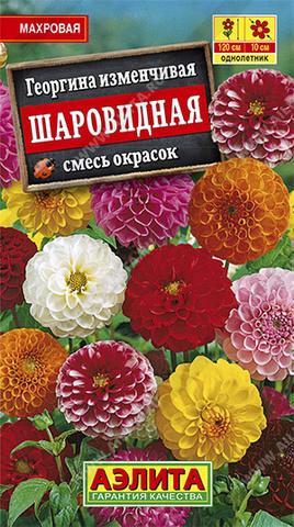 Георгина Шаровидная, смесь окрасок Аэлита