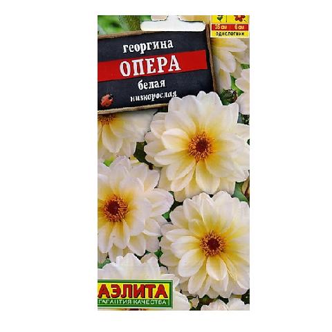 Георгина Опера белая (Аэлита)