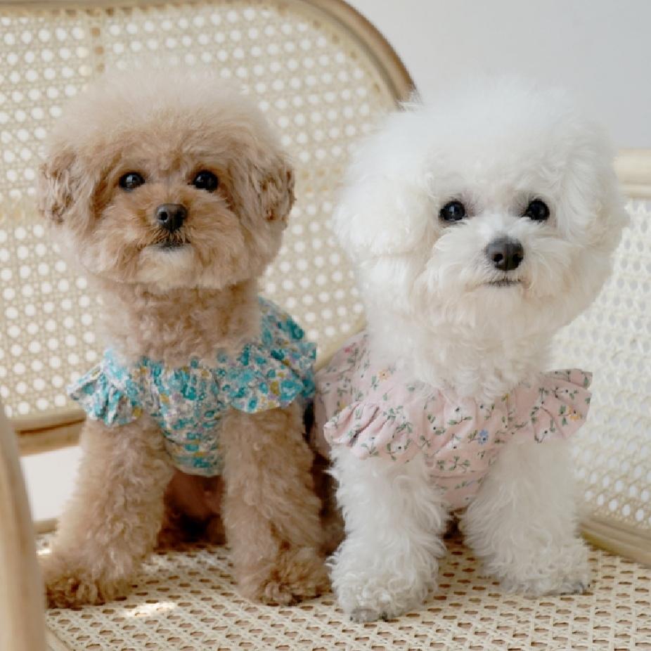 купить элитную одежду для собак в москве