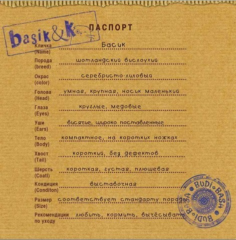сертификат кота Басика в зимней шапке ушанке