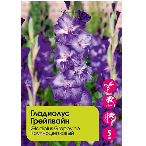 Гладиолус Грейпвайн крупноцветковый 5шт