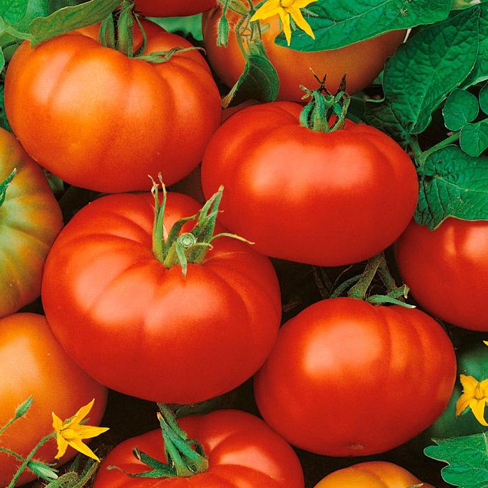 Томат Мона (TMAE 683 F1) семена томата детерминантного (Sakata / Саката) tmae_683.jpg
