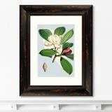 Уолтер Гуд Фитч - Himalaya Plants Purple And White Flowers, 1869г.