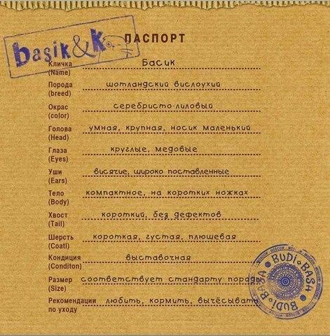 Басик лыжник - сертификат