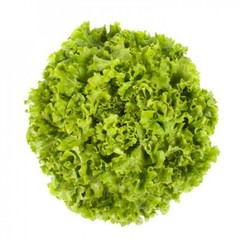 Отили семена салата батавия (Rijk Zwaan / Райк Цваан)
