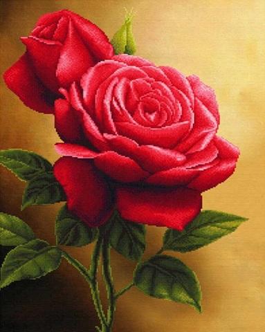 Алмазная Мозаика 30x40 Розы вблизи (арт. S3270)