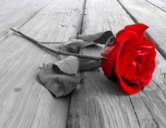 Картина раскраска по номерам 30x40 Красная роза на сером фоне