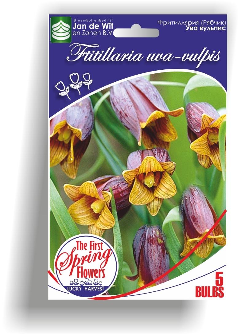 Фритиллярия  (Рябчик) Ува вульпис  (Fritillaria uva-vulpis) Jan de Wit en Zonen B.V. Нидерланды
