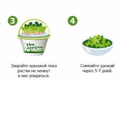 Набор для выращивания микрозелени КРЕСС-САЛАТ, инструкция по применению и семена в комплекте, Здоровья клад