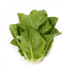 Рафаэль семена салата ромэн (Rijk Zwaan / Райк Цваан)