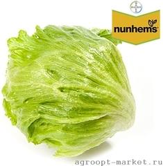 Гондар семена салата айсберг (Nunhems / Нюнемс)