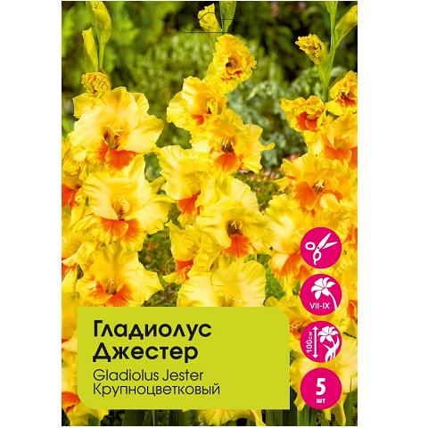 Гладиолус Джестер крупноцветковый 5шт