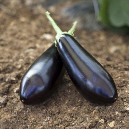 Баклажан Шарапова F1 семена баклажана (Rijk Zwaan / Райк Цваан) ШАРАПОВА_F1_семена_овощей_оптом.jpg