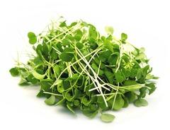 Набор для выращивания микрозелени РУККОЛА - 3 уп., инструкция по применению и семена в комплекте, Здоровья клад