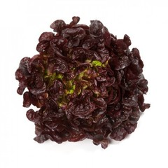 Роксай семена салата дуболистного (Rijk Zwaan / Райк Цваан)
