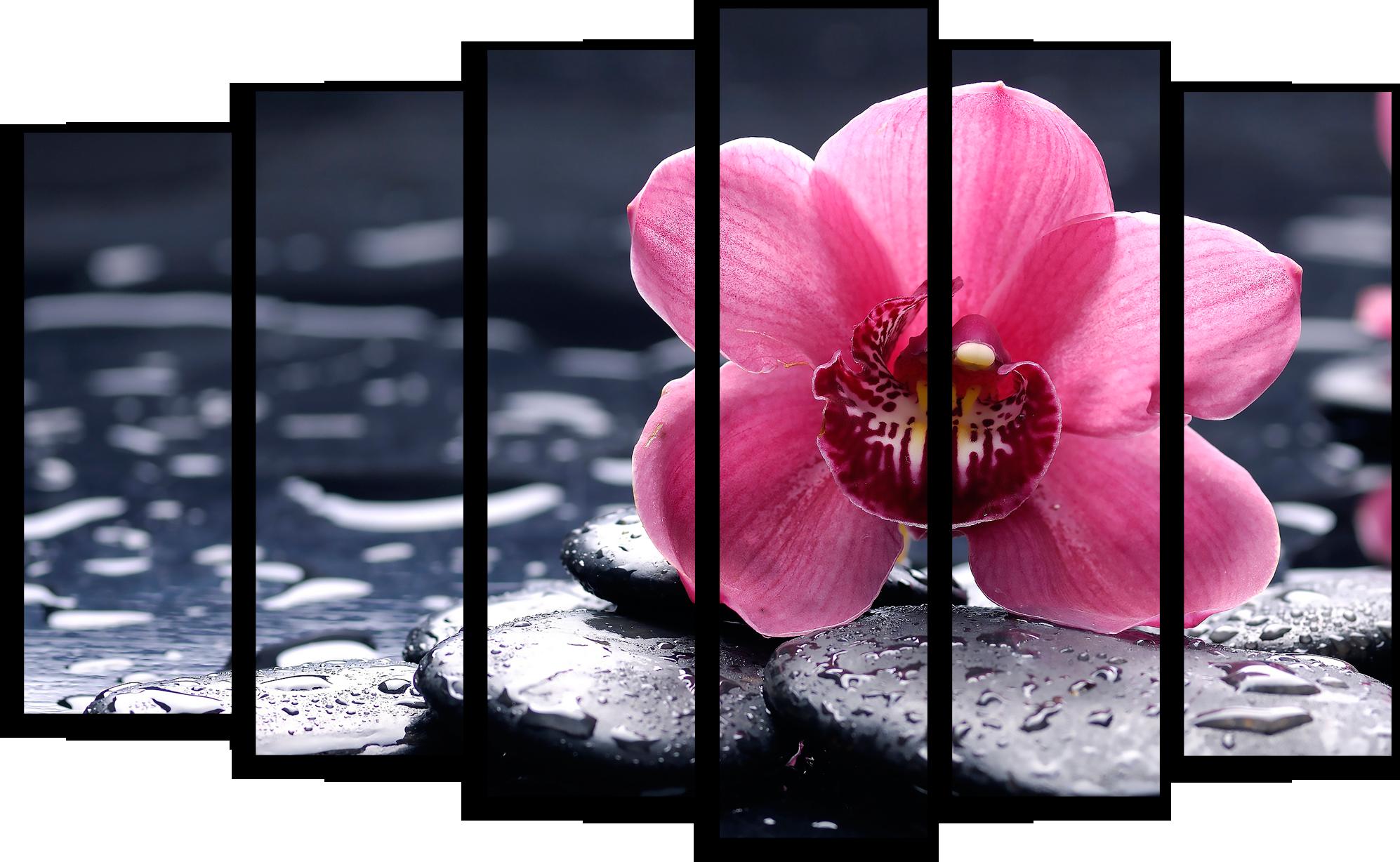 """Цветы Модульная картина """"Орхидея на черных камнях"""" М410.png"""