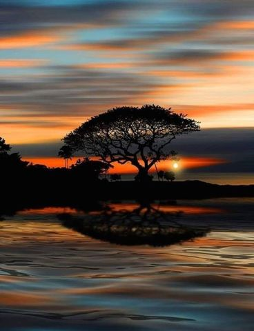Алмазная Мозаика 30x40 Дерево отражается на воде
