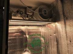 В110хД55хШ40 ГроуБокс PHILIPS 100W LED SILENT