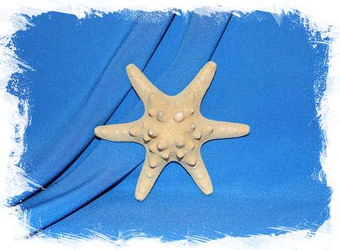 Филиппинская морская звезда 13 см. 6 лучей
