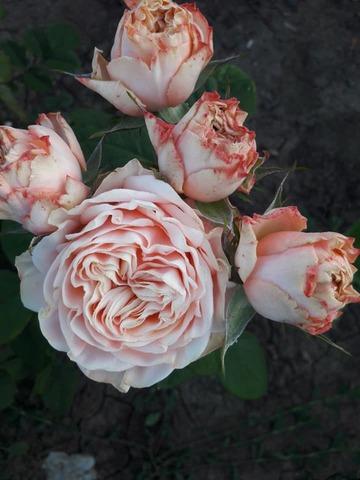Лавли Хартс(lovely hearts)
