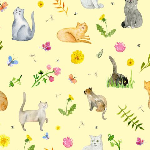 Луговые коты на жёлтом фоне