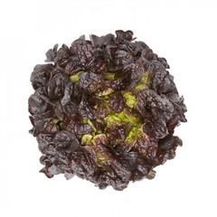 Сатудай семена салата дуболистного (Rijk Zwaan / Райк Цваан)
