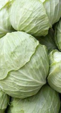 Семена Капуста белокочанная Белорусская 455 б/п