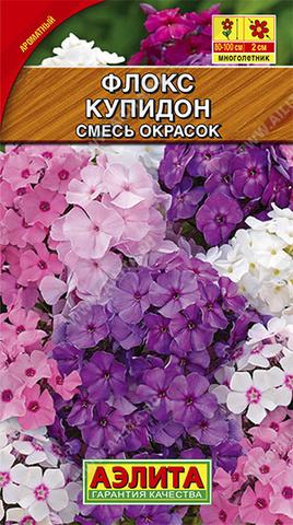 Флокс метельчатый Купидон, смесь окрасок