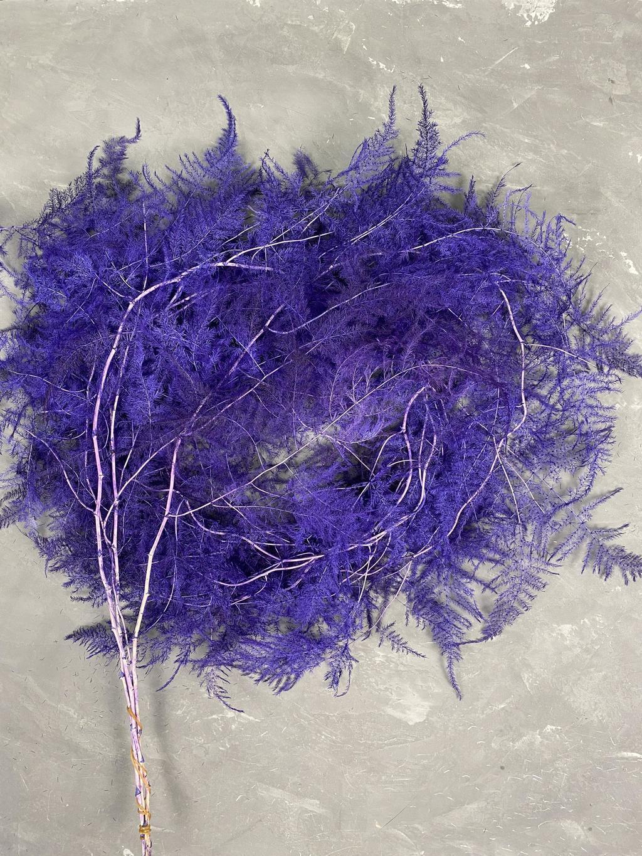 Аспарагус плюмозус фиолетовый