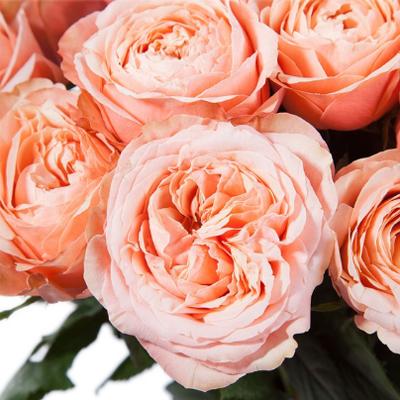 Пионовидные розы Кахала