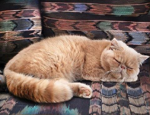 Алмазная Мозаика 20x30 Спящий кот на диване (арт. SGC5027 )