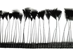 Тесьма  из перьев петуха на ножке h-7-10 см ( выбрать цвет)