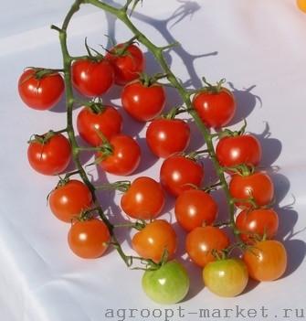 Красный Майорита F1 семена томата индетерминантного (De Ruiter Seeds / Де Ройтер Сидс) майорита.jpg