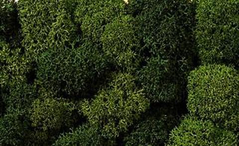 Кусты зелёные (природный мох)