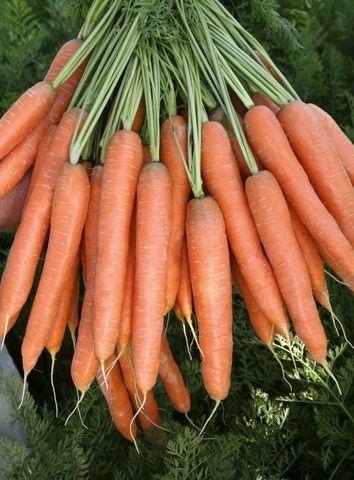 Нантская Престо F1 семена моркови нантской (Vilmorin / Вильморин) Престо_F1_семена_овощей_оптом.jpg
