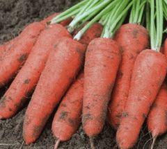 Проминанс F1 семена моркови курода/шантане (Takii / Таки)
