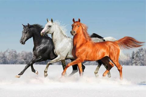 Алмазная Мозаика 40x50 Три коня скачут по снегу (арт. SGJ70553)