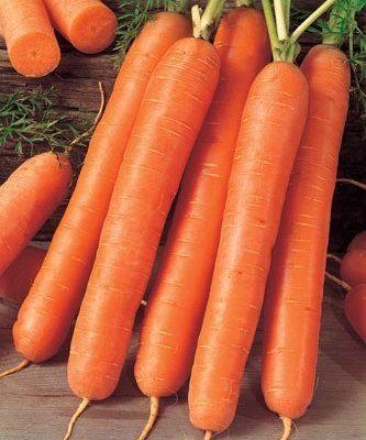 Нантская Ройал Форто семена моркови нантской (Seminis / Семинис) РОЙАЛ_ФОРТО__Royal_Forto__семена_овощей_оптом.jpg