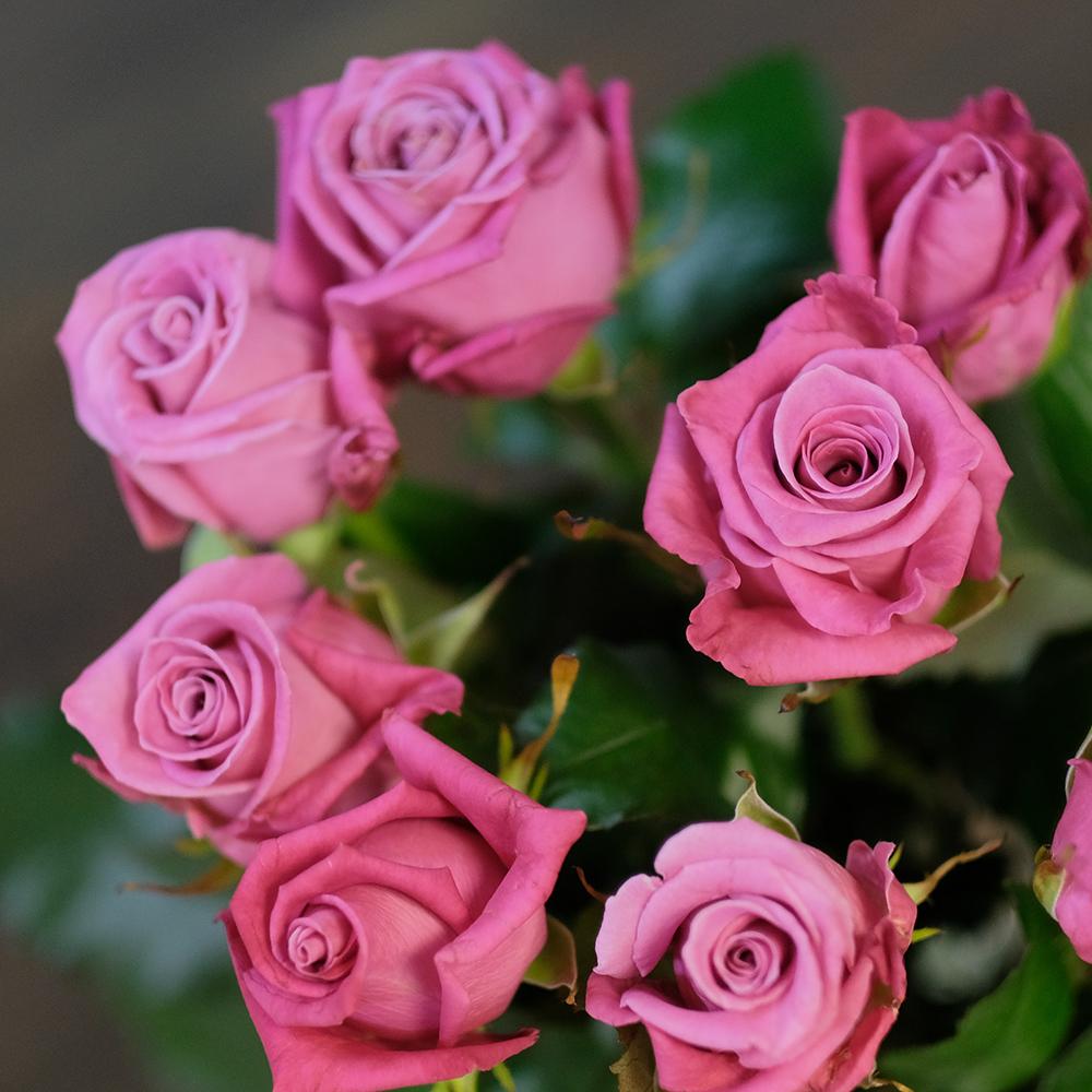 Розы малиновые Kosmik от 7шт