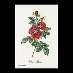"""Thea Gouverneur """"Африканская роза"""""""